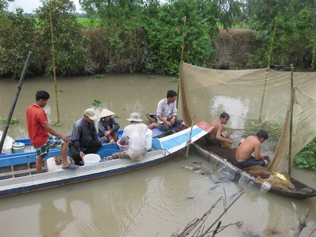 Dong Thap: Fishing in breeding season banned hinh anh 1