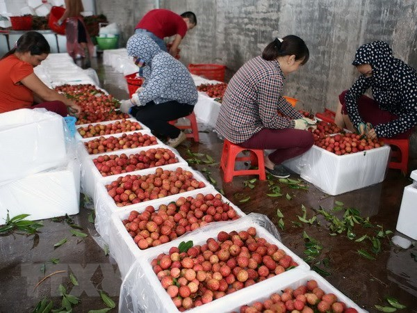 Bac Giang's lychee value estimated at 240 million USD hinh anh 1