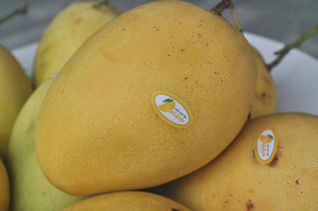 Dong Thap strives to turn mango into key export product hinh anh 1