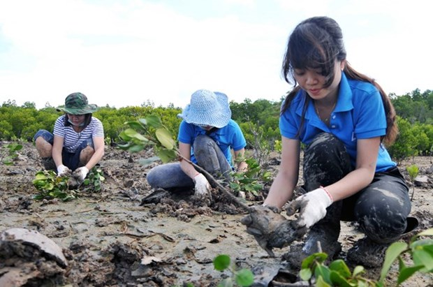 Vietnam wants to promote social forestry in ASEAN: official hinh anh 1