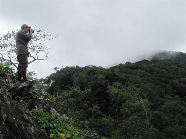 Vietnam to boost forest coverage in Central Highlands hinh anh 1