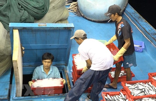 EC's yellow card warning – big chance for fisheries sector's restructuring hinh anh 1