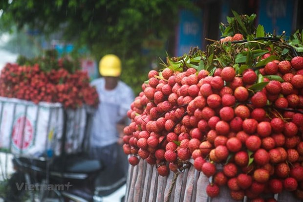 Bac Giang earns 5.4 trillion VND from lychees hinh anh 1