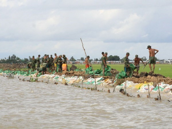 Ca Mau to build 2,000m of sea embankments hinh anh 1