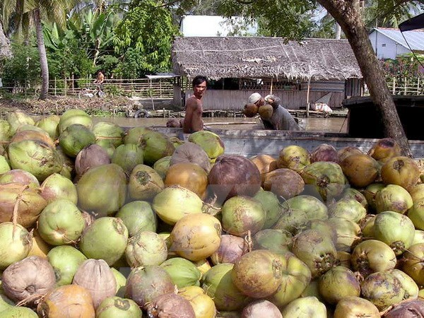 Ben Tre: Exports up 15.3 percent in year's first half hinh anh 1