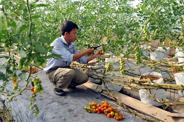 Nearly one-tenth of all agricultural firms set up in past six months hinh anh 1
