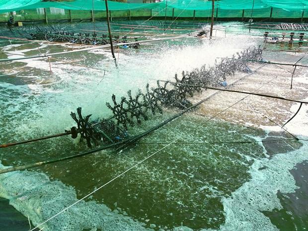 Israeli city seeks partnership importing Bac Lieu's shrimps hinh anh 1