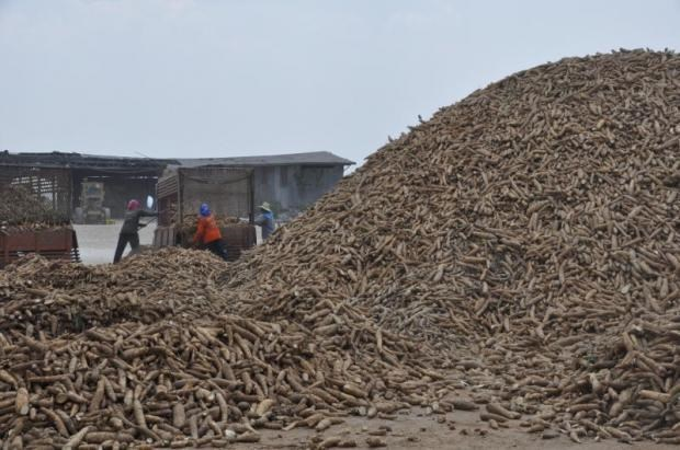 Thailand to export 1.5 million tonnes of cassava hinh anh 1