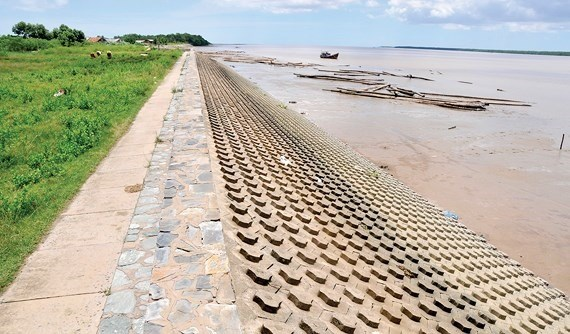 HCM City's sea dyke aims to stop waterlogging hinh anh 1