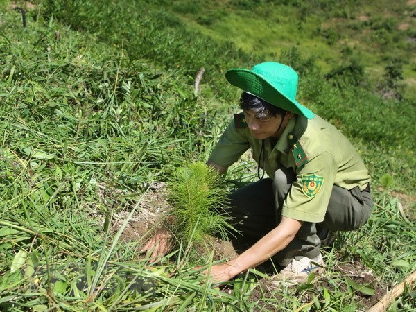 Nearly 57,000ha of alternative forests planted across Vietnam hinh anh 1
