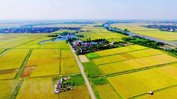 Agricultural land use market needs updated legal framework hinh anh 1