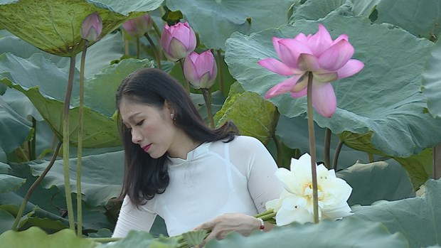 Lotus flower shows tranquil charm in summer heat hinh anh 2