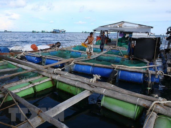 Draft strategy targets Vietnam's leading position in Asian mariculture hinh anh 1