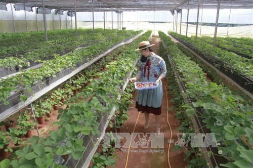 Lam Dong to set up new 215-ha high-tech agricultural farm hinh anh 1