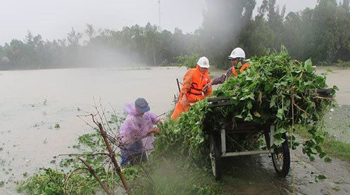 Quang Nam Red Cross raises funds for social security hinh anh 1