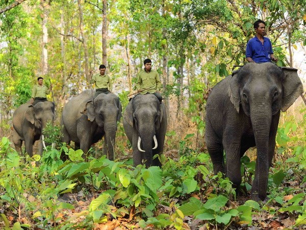 Yok Don National Park to boost elephant-friendly tourism hinh anh 1