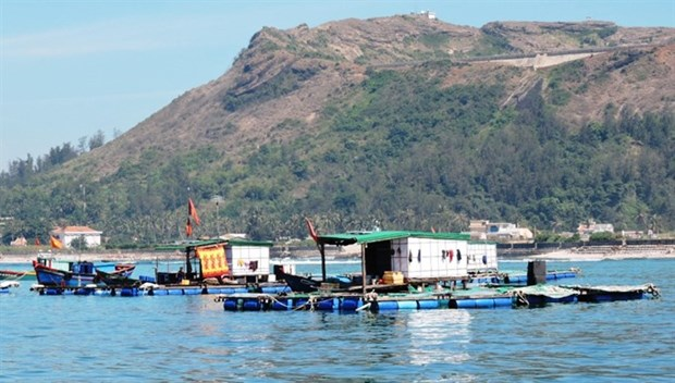 Funds allocated to preserve Ly Son Marine Protected Area hinh anh 1