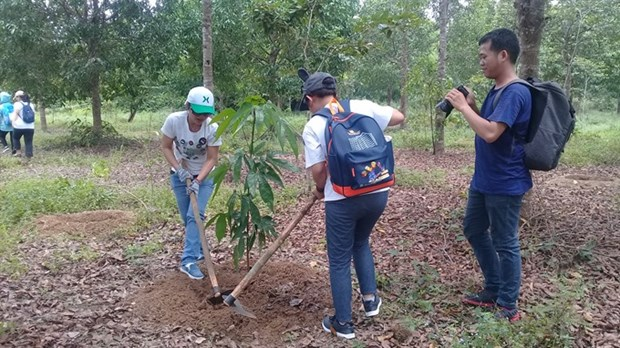 New plants ensures biodiversity in Dong Nai Biosphere Reserve hinh anh 1