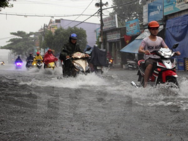 Localities urged to protect crops from torrential rains hinh anh 1
