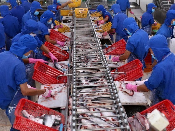 Vietnam eyes stronger export of aquatic products to Brazil hinh anh 1