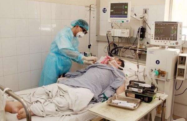 Mekong Delta on alert against swine flu hinh anh 1