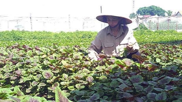 Vietnam's organic farming expansion faster than world average hinh anh 1