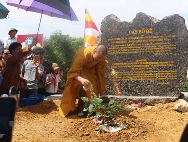 Sri Lanka's Bodhi tree planted at Tam Chuc Pagoda hinh anh 1