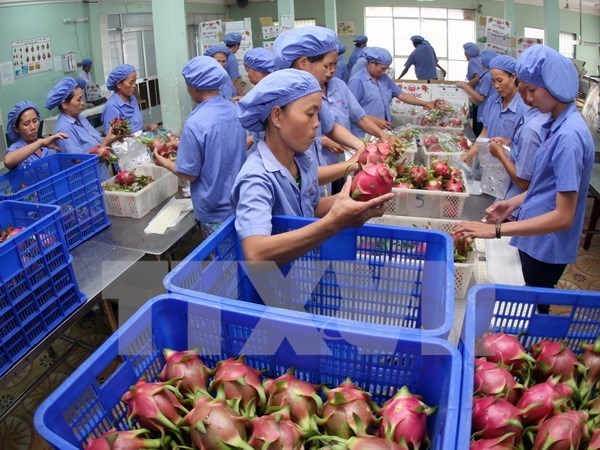 Vietnam may earn 4.7 billion USD from fruit, veggie exports in 2018 hinh anh 1