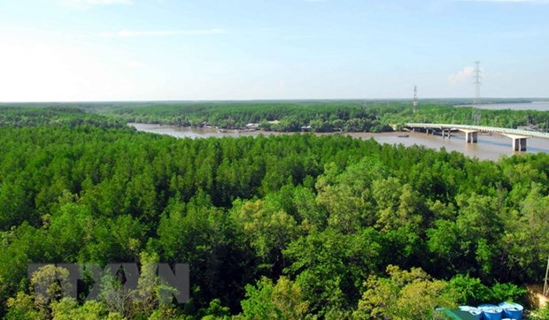 Vietnam's coastal forest coverage reaches 17 percent hinh anh 1