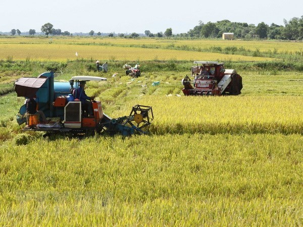 Southern localities report bumper summer-autumn crop hinh anh 1