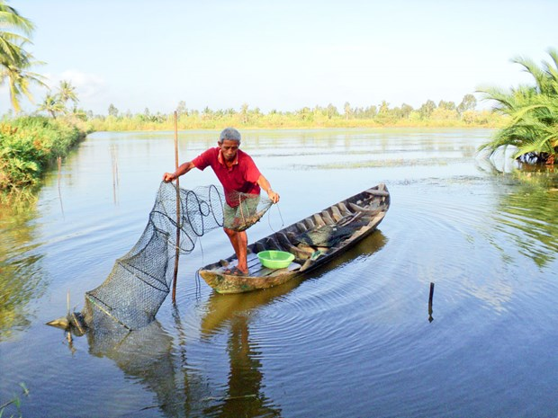 Eco-shrimp farming – model for sustainable aquaculture development hinh anh 1