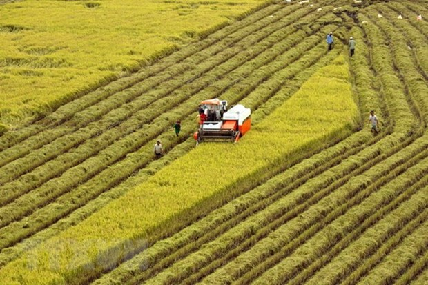 Quang Nam successful in restructuring agricultural sector hinh anh 1