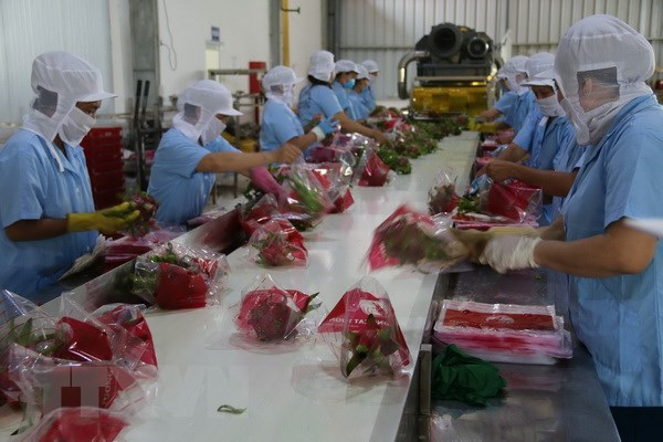 Vietnamese firms supported in gaining foothold in US market hinh anh 1
