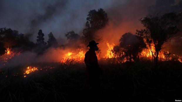 Many wildfire hotspots appear in Indonesia's Sumatra hinh anh 1