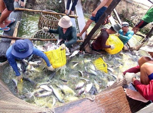 Agro-forestry-fishery exports hit 22.2 billion USD in first seven months hinh anh 1