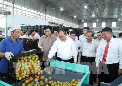 PM suggests agriculture triangle for Lam Dong development model hinh anh 1