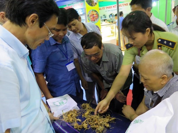 Second Ngoc Linh ginseng festival opens in Quang Nam hinh anh 1