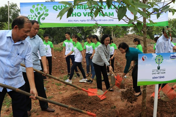 Programme planting 100,000 trees in Bac Kan launched hinh anh 1