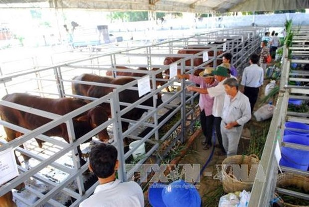 HCM City's leader urges higher status for agriculture hinh anh 1