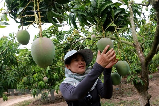 More organic products needed to boost agro exports to EU hinh anh 1