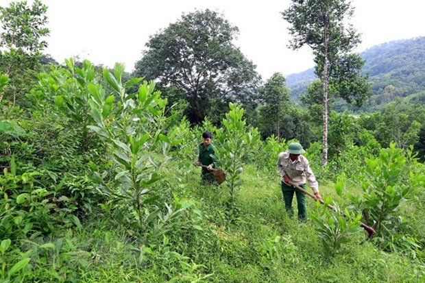 Thua Thien-Hue eyes sustainable forest development hinh anh 1