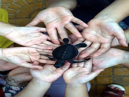 Ninh Thuan works to protect sea turtles hinh anh 1