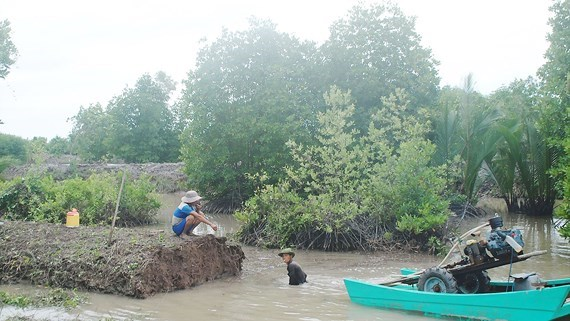 First soil bank in Mekong Delta hinh anh 1