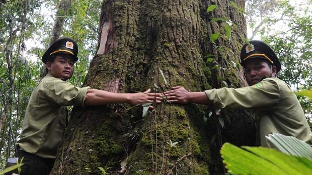 Precious trees recognised as heritage hinh anh 1