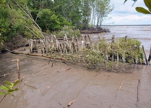 Kien Giang faces serious riverbank, coastal erosion hinh anh 1