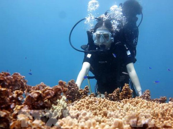 Underwater stone arch draws visitors to island district hinh anh 3