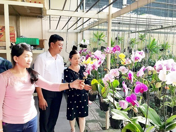 HCM City seeks to expand orchid market hinh anh 1