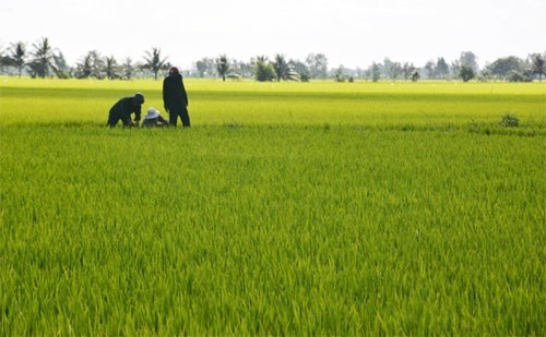 Dong Nai encourages large-scale fields, cooperatives hinh anh 1