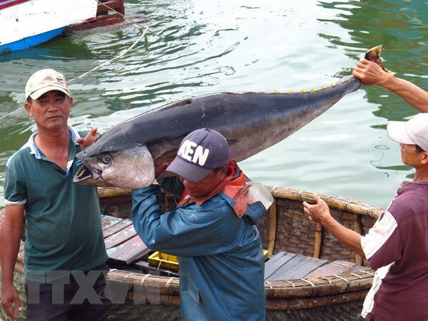 Tuna exports likely to hit 500 million USD in 2018 hinh anh 1