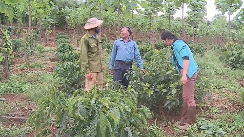 Central Highlands province promotes sustainable agricultural production hinh anh 3
